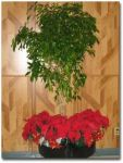 holiday_plant_2