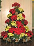 poinsettia_tree_2