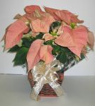 salmon_poinsettia